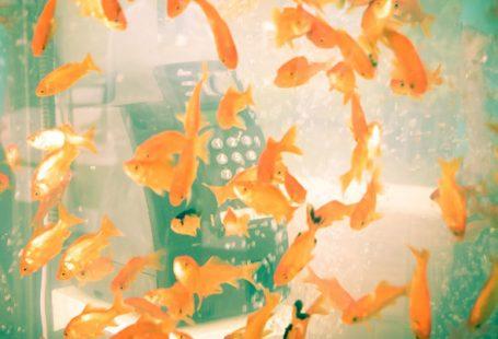 Il copyright della cabina telefonica trasformata in acquario di Nobuki Yamamoto